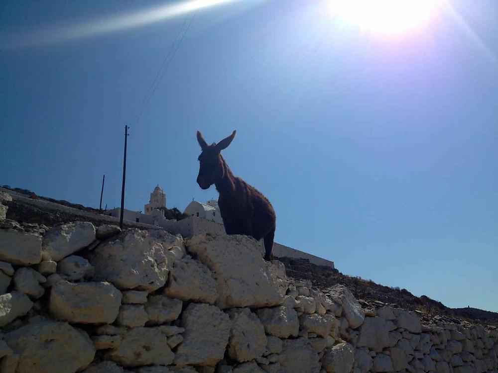 Donkey friend on morning walk up