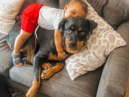 6 Tips For Bringing Baby Home To Your Dog!