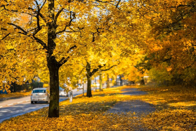 Seasonal Accident Compensation Claims: Driving in Fall