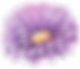 Flowers of Togian Islnds