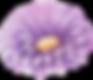 FLOWER OF POKI POKI