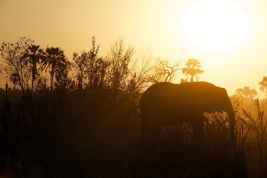 AROYÓ-Safari-Elephant-Tarangire.jpg