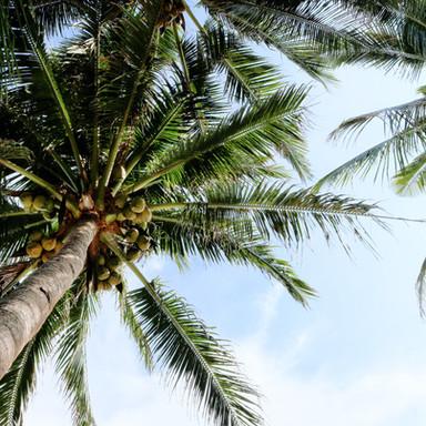 Palm Trial
