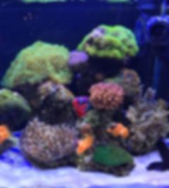 aquarium-2922841_2.jpg