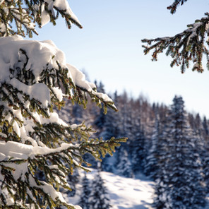Snow and Weather Report: December