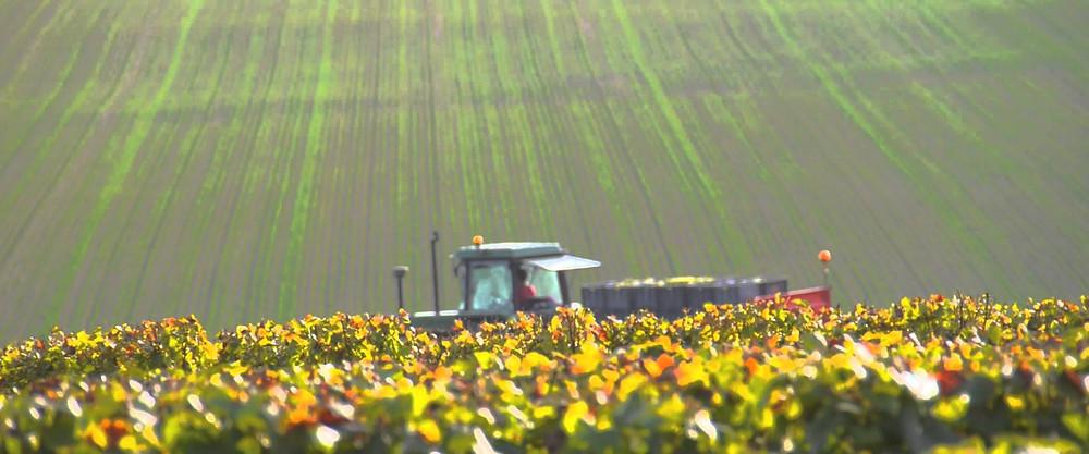 Champagne vs Ile-de-France: la vendemmia in Champagne