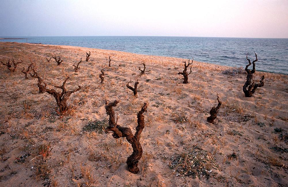 Il Primitivo ama il mare e la macchia mediterranea