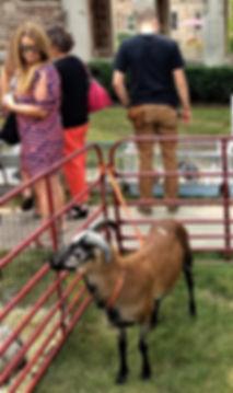 Goat .jpg