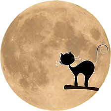 moon-and-black-cat-silhouette-png-image.