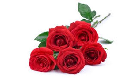 Dagmer 5 roses.png
