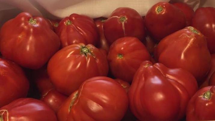 Los Tomates de Villa Manolica