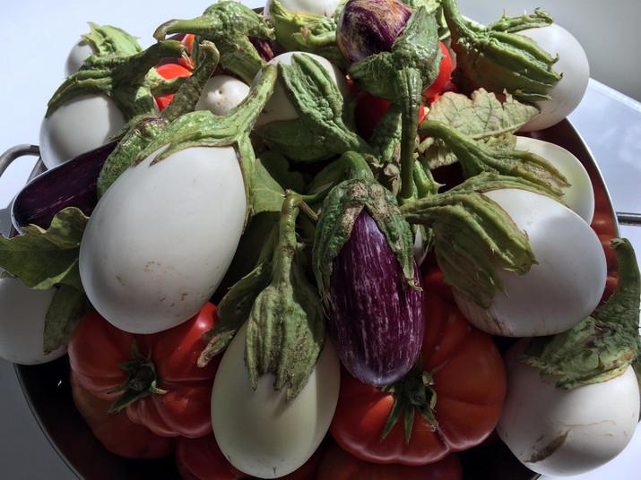 Cocinamos con las verduras de Villa Manolica
