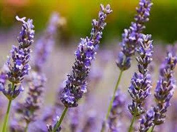 Organic French Lavender Deodorant Creme