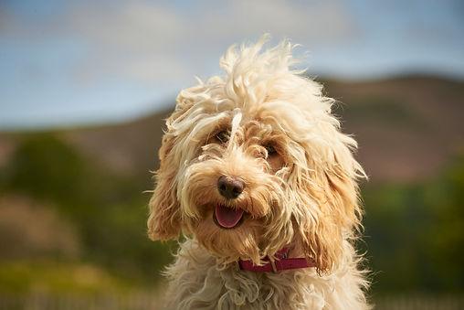 Easingwold Dog Walker and Pet Home Visits
