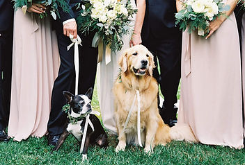 dogs-in-weddings-part-of-the-crew.jpg