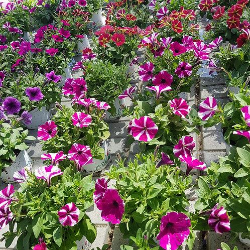 """צמחים פורחים 10 ש""""ח"""