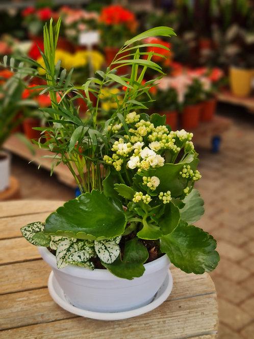 קוקטייל צמחים חגיגי