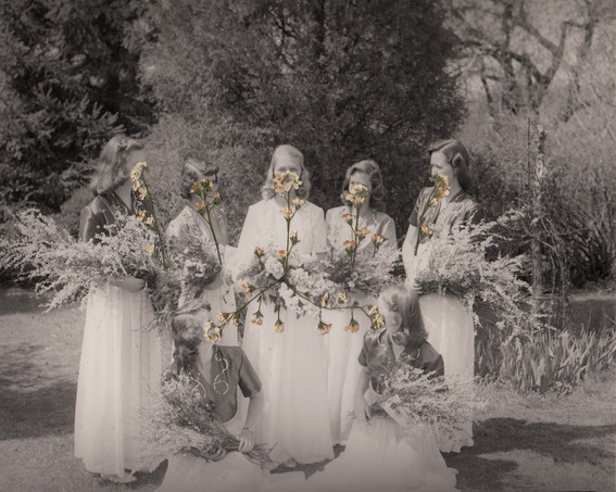 Helena's wedding (white forget-me-nots)