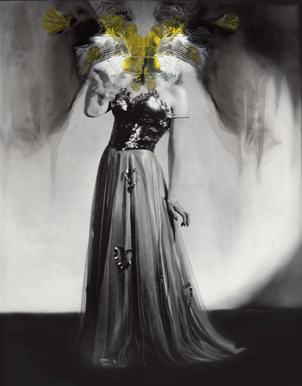 Viola (Nymphadalidea)