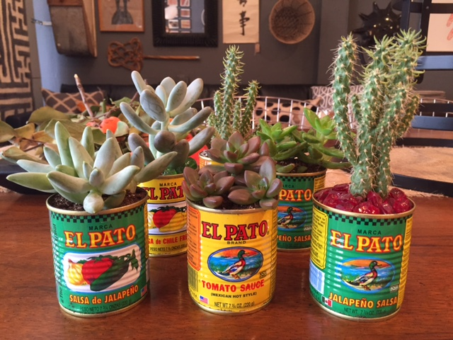 Cactus in Cans