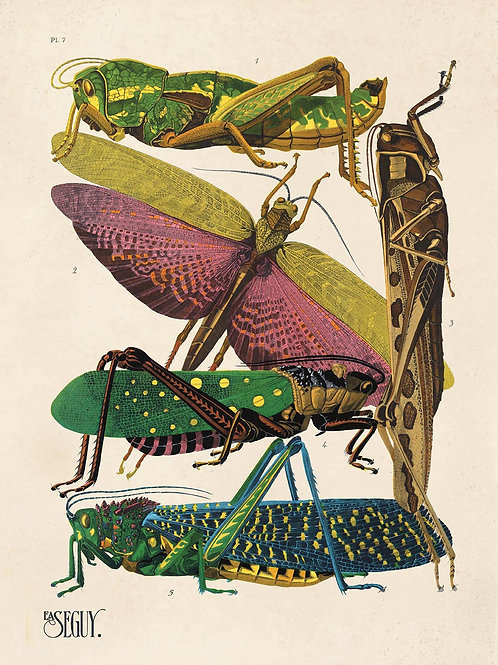 Vintage Natural History Grasshopper and Insects 16x20 Print