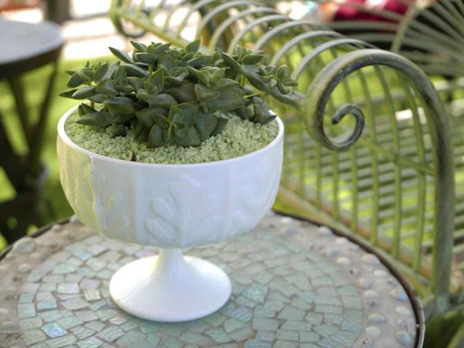 Chica Verde Succulents in San Antonio Express News!