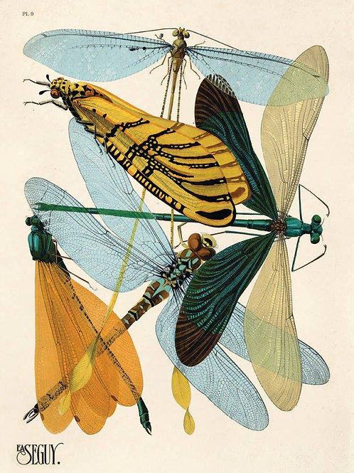Vintage Natural History Dragonfly Damselfly Insect 11x14 Print