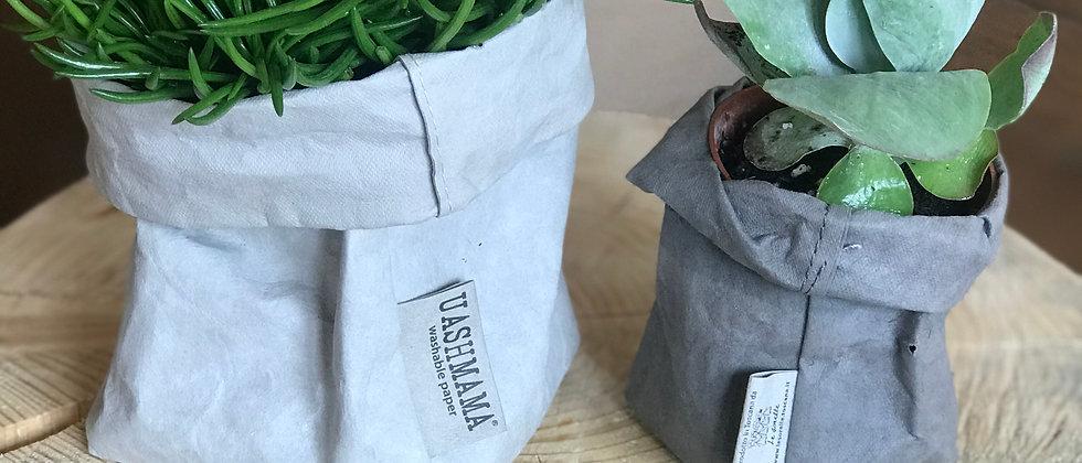 Uashmama mit Pflanze