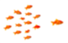 acco poisson.png