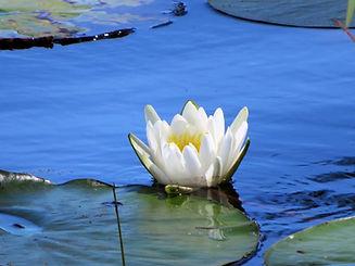 lili.jpg