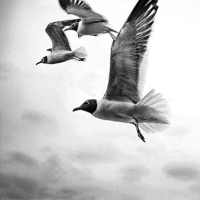 These seagulls were photographed on the beach in South Padre Island, Texas_edited.jpg