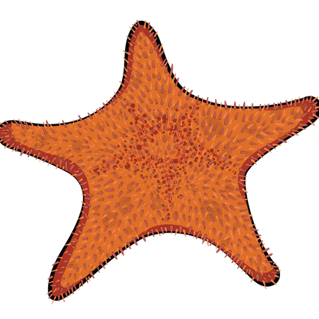 Spiny Red Star