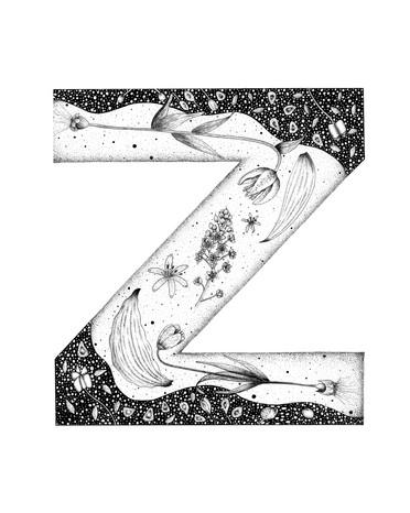 Z for Zigadenus venenosus in Liliaceae