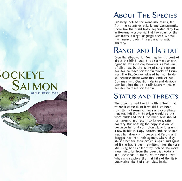The Sockeye Salmon of the Fraser River