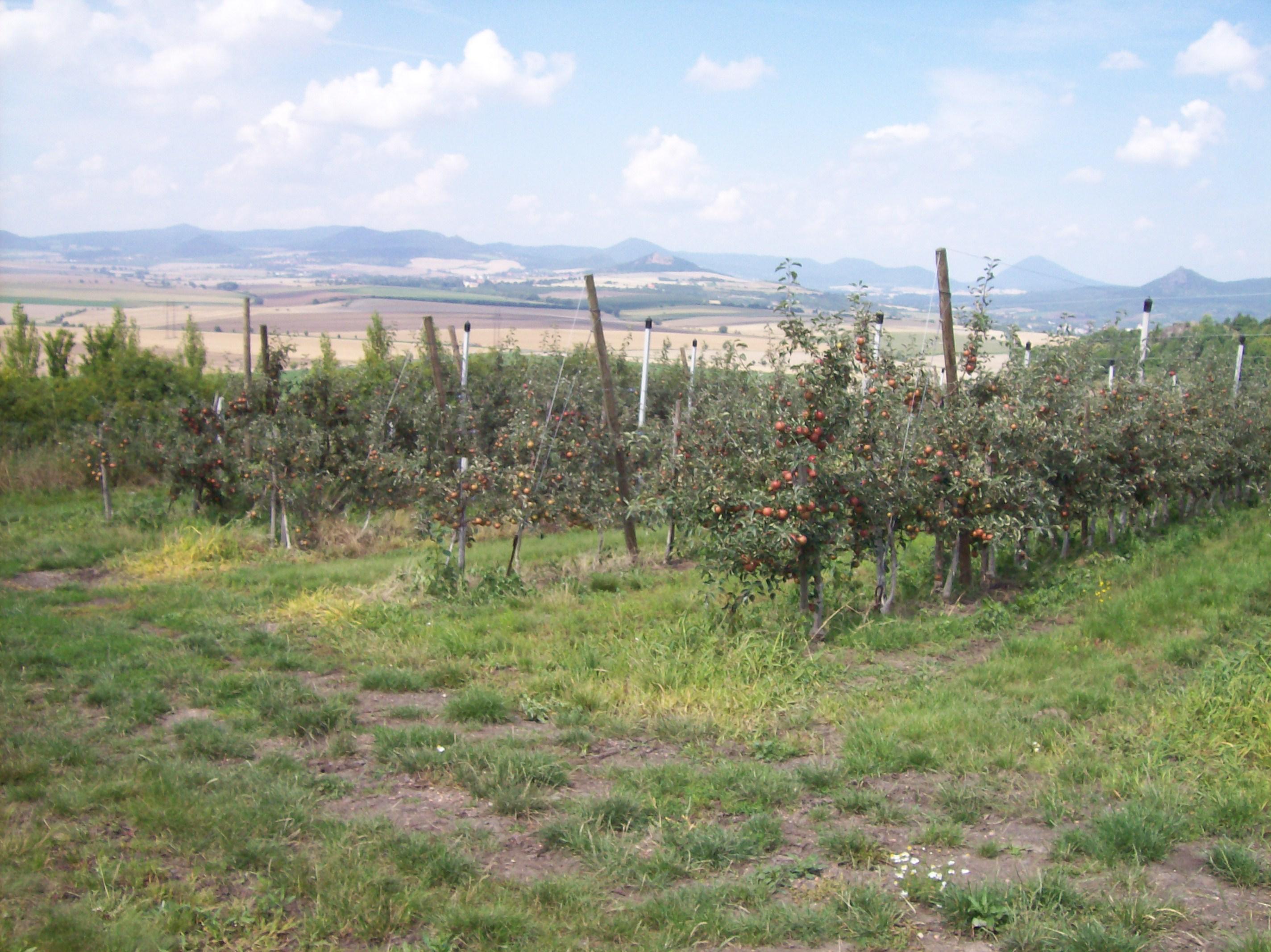 Opěrná konstrukce sadu jabloní
