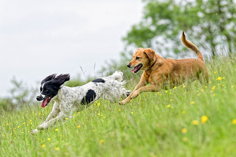pals running in field