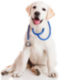 RxMobility healthy dog