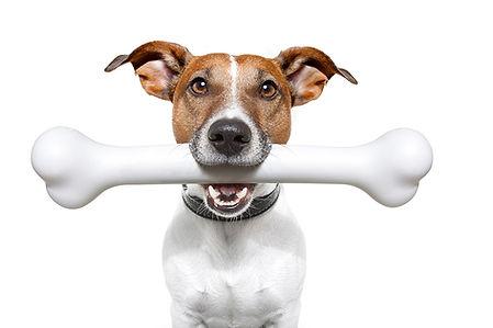 dog with bone.jpg