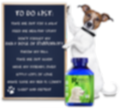 RxMobility Jack Russell with to-do list