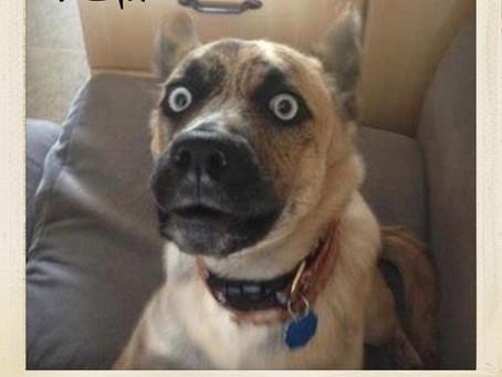 TGIF - Thank Dog it's Friday!