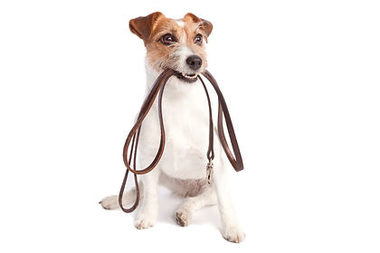 RxMobility JackRussell with leash