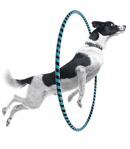 rx jumping dog.png