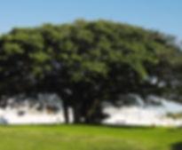 lomas de la rioja arbol.jpg