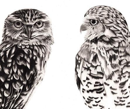 Owl Pair 2020
