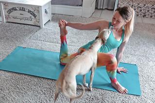 I got a yoga teacher job! :-)