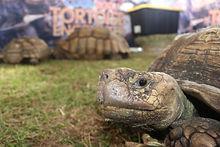 Giant Tortoise pic 2.jpg