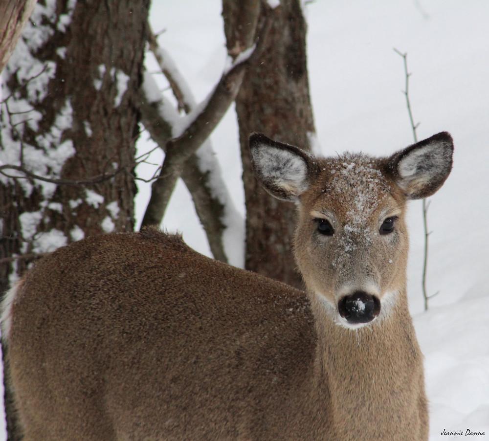 deer IMG_3957.JPG