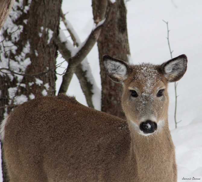 Winter Hirsch