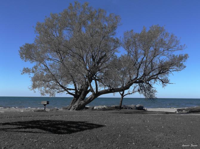 Lake Erie Blue