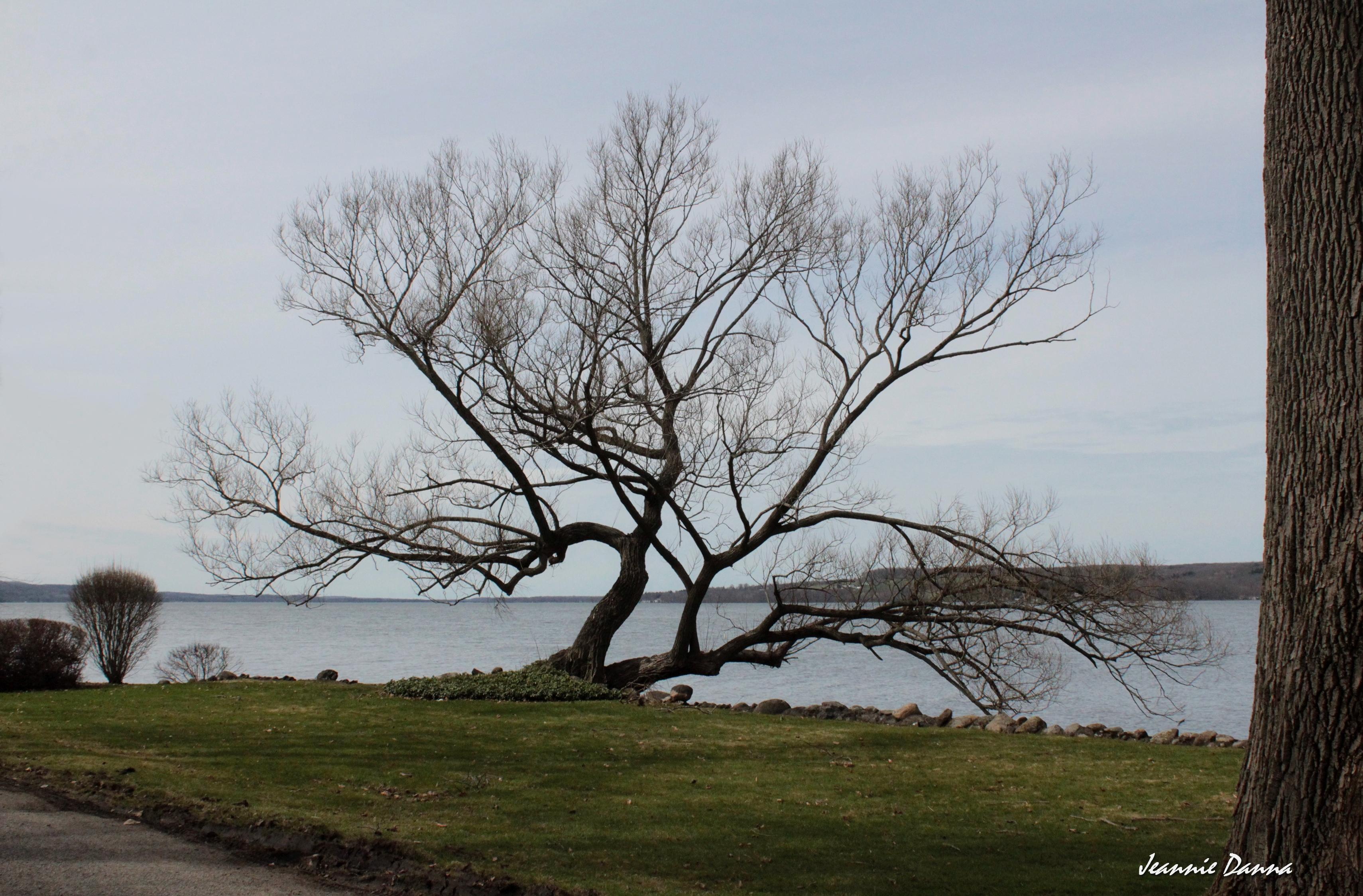 Chautauqua Lake Tree